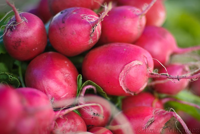 radishes-farmers-market-jackson-heights